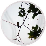 A Brown Thrasher Sings In Sycamore Tree Round Beach Towel