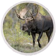 A Bull Moose Named Gaston Round Beach Towel
