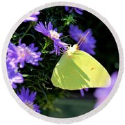 A Clouded Sulphur On Lavender Mums Round Beach Towel