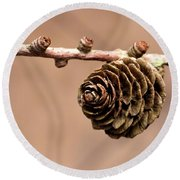 A Conifer Cone On A Tree Branch Round Beach Towel