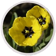 A Couple Of Bright Yellow Tulip Flowers Round Beach Towel
