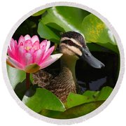 A Curious Duck And A Water Lily Round Beach Towel