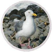A Curious Seagull Round Beach Towel