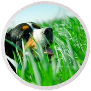 A Cute Dog In The Grass Round Beach Towel