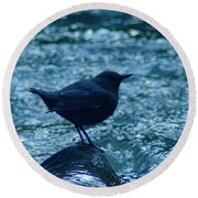 A Dipper On A Rock Round Beach Towel