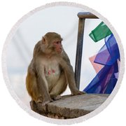 A Female Macaque On Top Of Wall Round Beach Towel