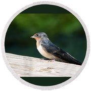 A Female Purple Martin Is Watching You Round Beach Towel