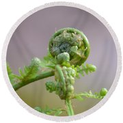 A Fiddlehead Abstract Round Beach Towel