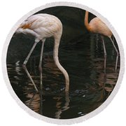 A Flamingo With Its Head Under Water In The Jurong Bird Park Round Beach Towel