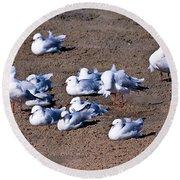 A Flock Of Seagulls Round Beach Towel