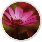 A Flower In A Shadow  Round Beach Towel
