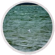A Forster Tern Fighting The Winds Out At Sea Round Beach Towel