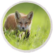 A Fox In The Grass  Montreal, Quebec Round Beach Towel