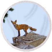 A Fox On The Rocks Round Beach Towel