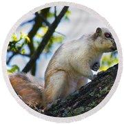 A Fox Squirrel Poses Round Beach Towel