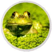 A Frogs Day Round Beach Towel