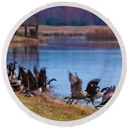 A Gaggle Of Geese Round Beach Towel