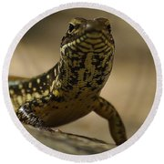 A Golden Skink Round Beach Towel