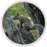A Gray Squirrel Pose  Round Beach Towel