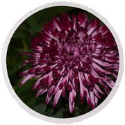 A Happy Birthday Wish With An Elegant Maroon And Pink Mum Round Beach Towel