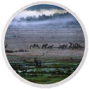 A Heard Of Elk Graze In A Misty Meadow Round Beach Towel
