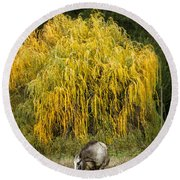 A Horse And A Willow Tree Round Beach Towel