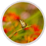 A Humming Bird Perched Round Beach Towel