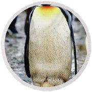 A King Penguin Holds Its Egg Round Beach Towel