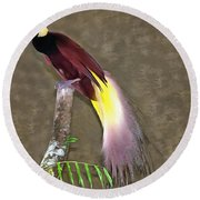 A Large Bird Of Paradise Round Beach Towel