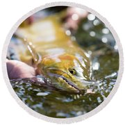 A Large Cutthroat Being Released Round Beach Towel