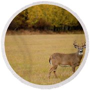 A Large Whitetail Buck Stairs Round Beach Towel