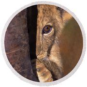 A Lion Cub Plays Hide And Seek Wildlife Rescue Round Beach Towel