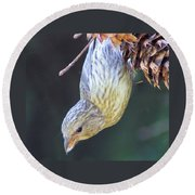 A Little Bird Eating Pine Cone Seeds  Round Beach Towel