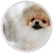 A Little Cutie Round Beach Towel by Jenny Rainbow