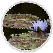 A Little Lavendar Water Lily Round Beach Towel