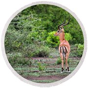 A Male Impala In Lake Manyara National Park. Tanzania. Africa. Round Beach Towel