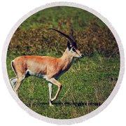 A Male Impala In Ngorongoro Crater. Tanzania Round Beach Towel
