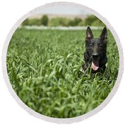 A Military Working Dog Sits In A Field Round Beach Towel by Stocktrek Images