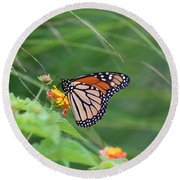 A Monarch Butterfly At Rest Round Beach Towel