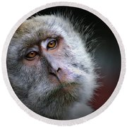 A Monkey's Look Round Beach Towel