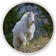 A Mountain Goat Stands On A Grassy Round Beach Towel