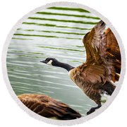 A Pair Of Canada Geese Landing On Rockland Lake Round Beach Towel