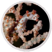 A Pair Of Pygmy Seahorse On Sea Fan Round Beach Towel