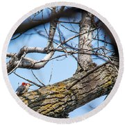 A Pair Of Red-bellied Woodpeckers Round Beach Towel