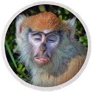 A Patas Baby Monkey Behaving Badly Round Beach Towel