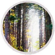 A Path In The Pines Round Beach Towel