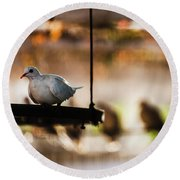 A Pigeon In A Cage Round Beach Towel