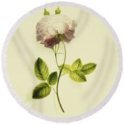 A Pink Rose Round Beach Towel by James Holland
