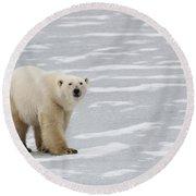 A Polar Bear On Hudson Bay Round Beach Towel