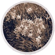 Clusters Of Daffodils In Sepia Round Beach Towel